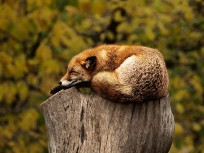 How to Manage Bookmarks in Firefox