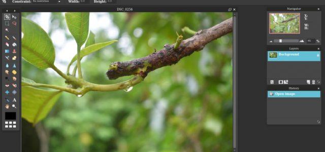 6 Pixlr Alternatives to Edit Photos Online